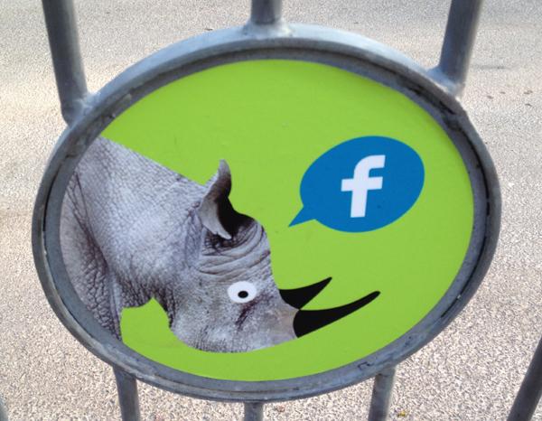 Marwell Zoo white rhino